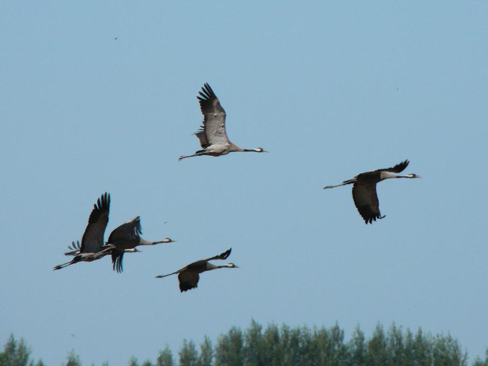 Хищные птицы белгородской области